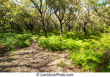 tree and fern in the forest - fern and tree in a Sardinian...