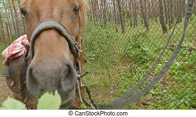 man feeding branch horse slow motion video - man feeding a...