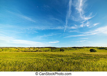 cloudy sky over a green meadow in sardinia