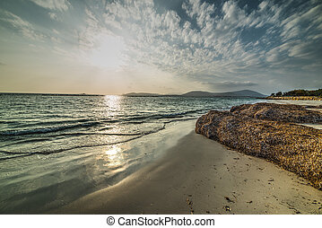 seaweed in Alghero shore at sunset