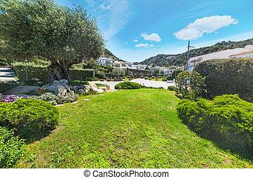green meadow in Poltu Quatu, Sardinia