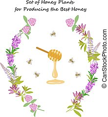 Honey plant set for producing the best honey for banner or...