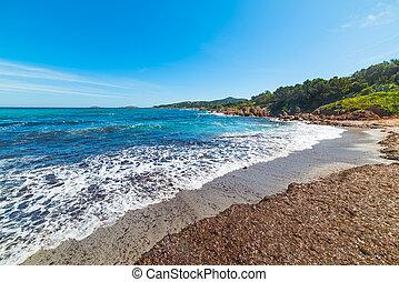 pevero, flautín, playa, Algas marinas