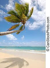 exoticas, Caraíbas, sobre, palma, penduradas, praia