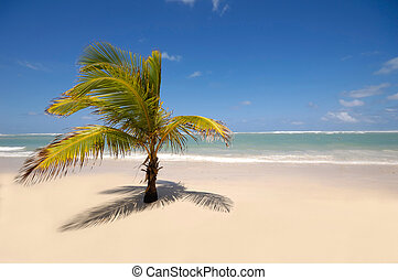 Caribbean beach with palm and white sand with the coast in...