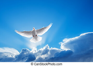 White Dove symbol of faith