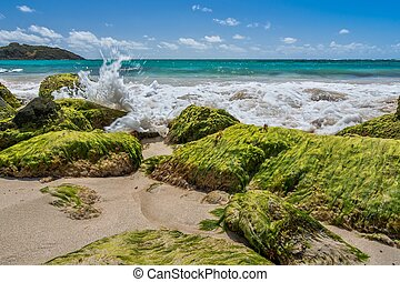 Green Rocks of the Caribbean - Caribbean beach with teal...