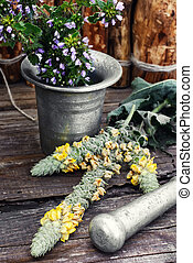 Medicinal plants and mortar - Iron mortar with pestle and...