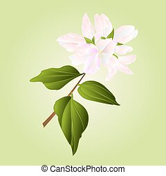 Philadelphus white flower vector.eps - Philadelphus white...