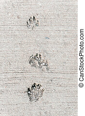 Dog foot print. - Dog foot print, this image have space for...