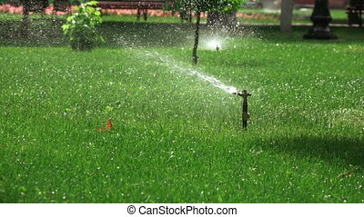 Sprinkler irrigation in park
