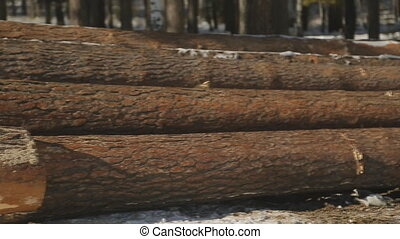 Close up view of sawn timber lying on ground in winter.