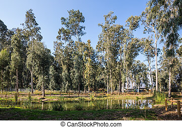 The reserve of migratory birds Hula - The picturesque park...