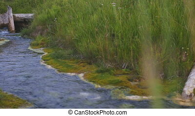 Close up view of forest stream flowing in green fresh grass....