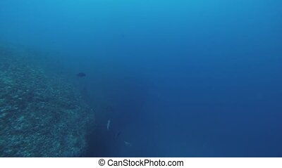 Divers swim underwater. Blue ocean. Deepness. Sealife....