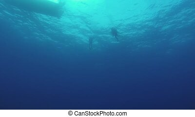 Divers swim underwater in wetsuit with aqualung. Blue clean...