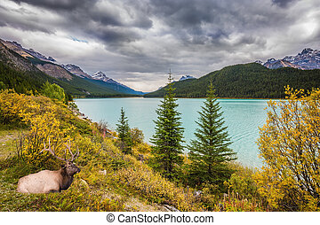 The Banff National Park - The Rocky Mountains, Canada, Banff...