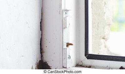 Hornet's Nest in the Window Frame Euro Windows. Full HD 1920...