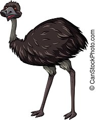 Emu bird on white background illustration