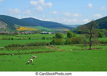 Tweed valley looking east - a view of Tweed valley towards...