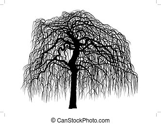 Mulberry tree without leaves - vector art leafless mulberry...