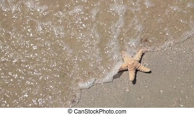Starfish lying on the seashore and washed by the wave,...