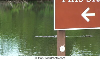 Crocodiles at a Boat Ramp
