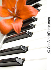 Lily on the piano - On the piano keyboard is a flower tiger...