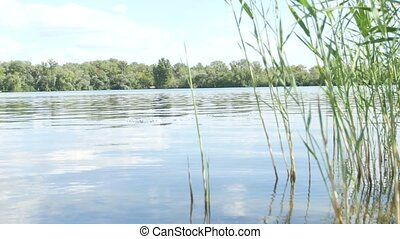 Plants on the river in summer day - Wide river with a...