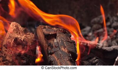 Camp fire. Cose up - Bright burning campfire, campfire macro...