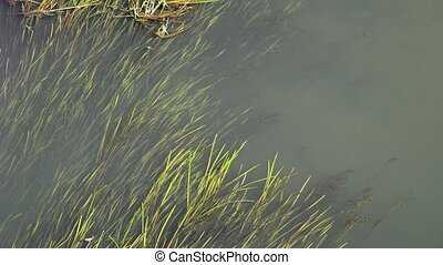 small river overgrown with reeds and duckweed