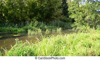The shallow river in summer on a sunny day - The shallow...