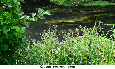 Meadow flowers on banks of a small river - Meadow flowers on...
