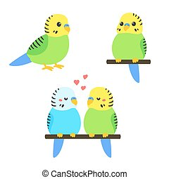 Cute cartoon budgie vector illustration set. Little parakeet...