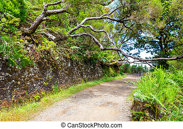 laurel forest and Irrigation canal Lewada das 25 fontes and...