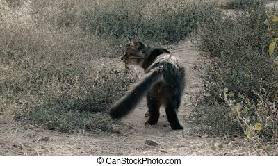 Gray cute cat walking at ground path rear view. Cat looking...