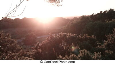 Photographing at sunset - Pine tree forest at sunset