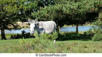 Wild donkey horse walking on a green field