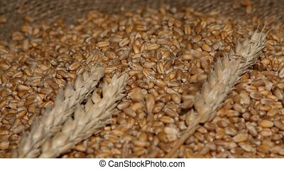 Wheat pouring on top of the grain pile with wheat sheaf on...