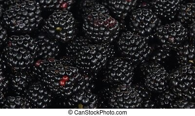 Blackberries. Rotating. White - Many fresh blackberry, fresh...