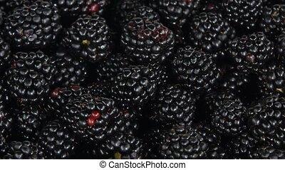 Blackberries. Rotating. White - Many fresh blackberry, fresh...