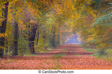 Autumn lane with bright colored yellow Beech trees