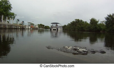 Crocodile at a Marina
