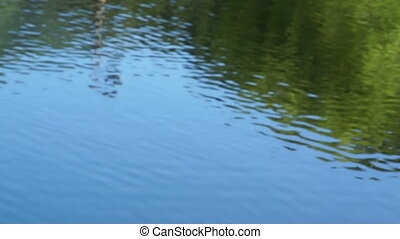 Shot of lake scenic in summer. Blurred nature unfocused...