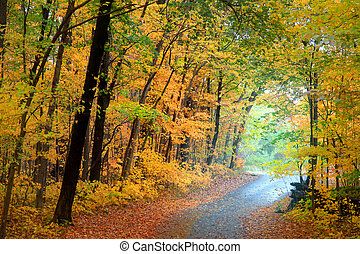 Autumn alley - Biking trail through autumn trees