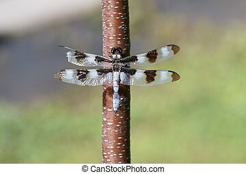 close up of dragonfly sitting in the tree