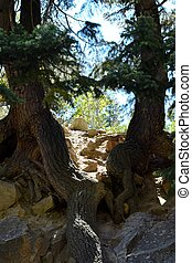 tree roots - photo of tree roots