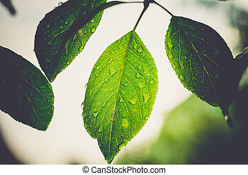 Leafage on Branch Macro Retro - Fresh green leaves on a...