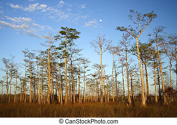 Big Cypress Moonrise - The moon rises over Big Cypress...
