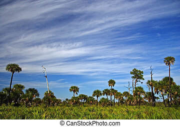Big Cypress Pinelands - Pinelands in the Florida Everglades,...